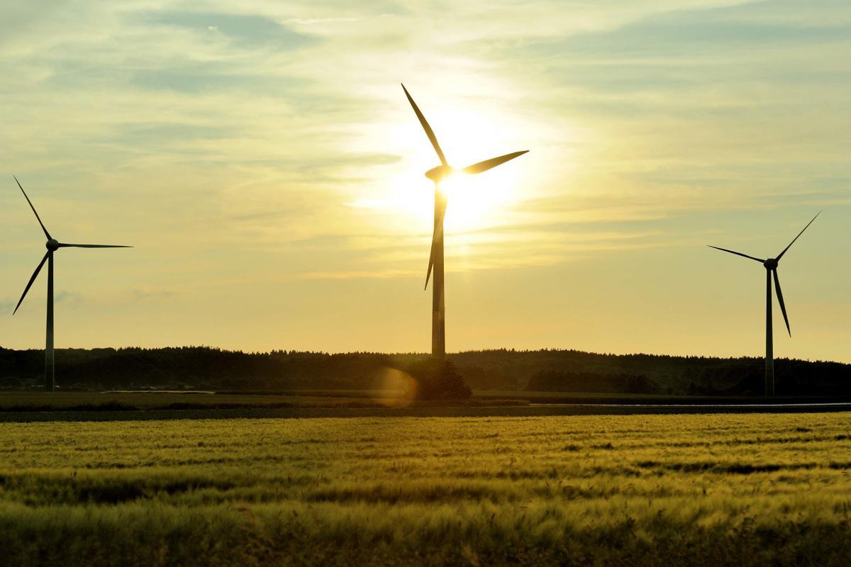 Grünes Feld, im Hintergrund 3 Windräder vor aufgehender Sonne